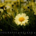 Ludwigsburger Gartentage im Blühenden Barock. Im Regen...
